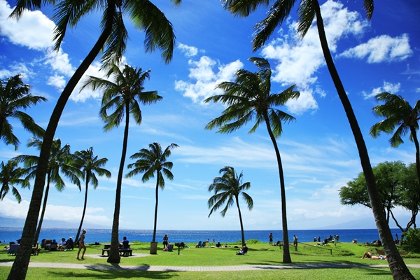 Hawaii tropical beach